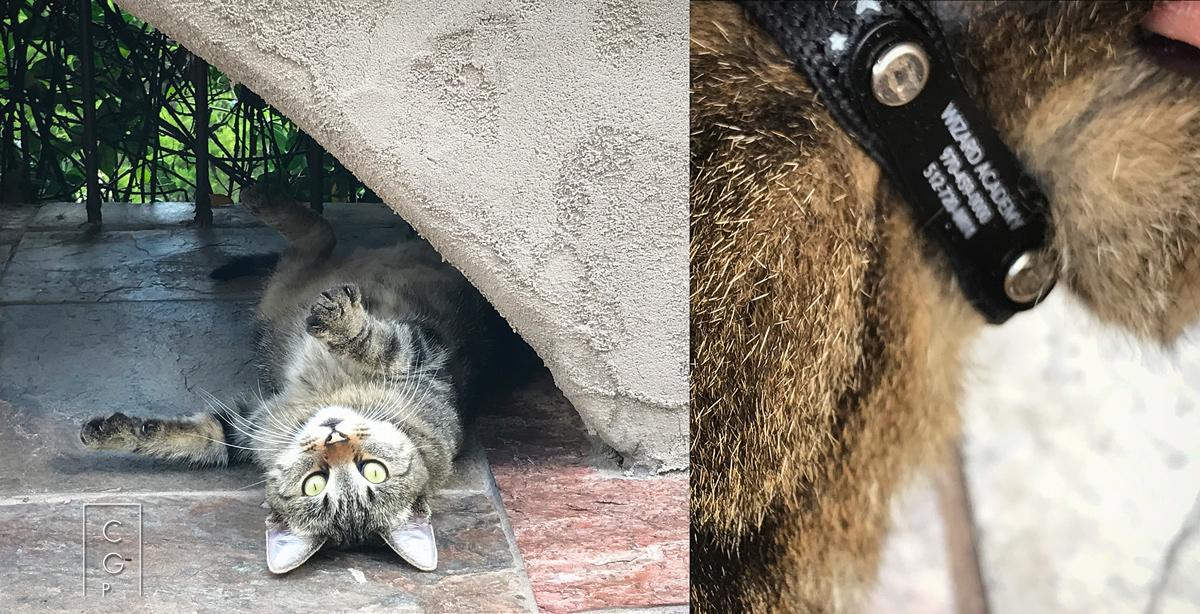 Portrait Studio Sponsors a Cat